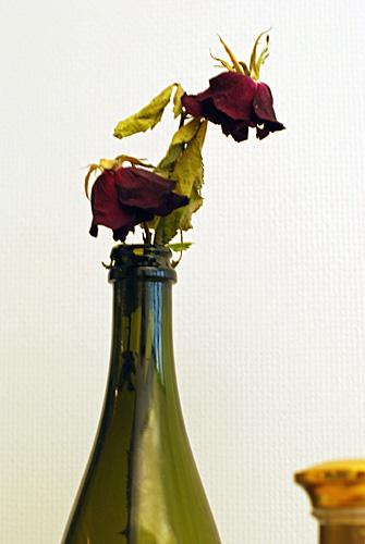 kaksi_ruusua